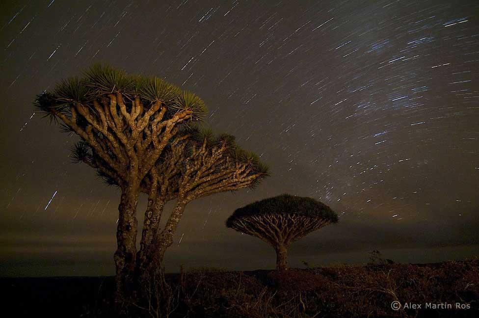 Socotra.
